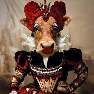 Bovine Queen of Hearts